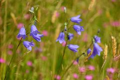 SOMMER - Blumen-3-
