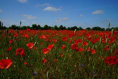 Sommer - Die Farbe Rot
