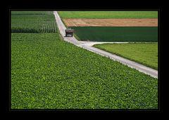 Sommer-Felder