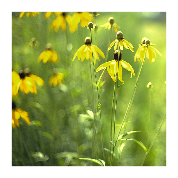 sommer-gelb