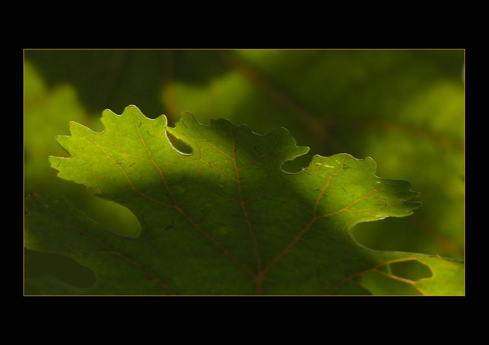 Sommer - Grün