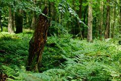 Sommer im Laubwald