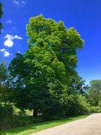 Sommer im Rosensteinpark