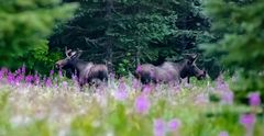 Sommer in Alaska...