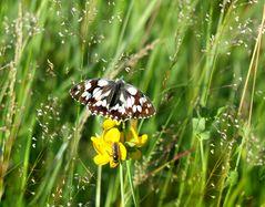 Sommer in der Hochmoorwiese