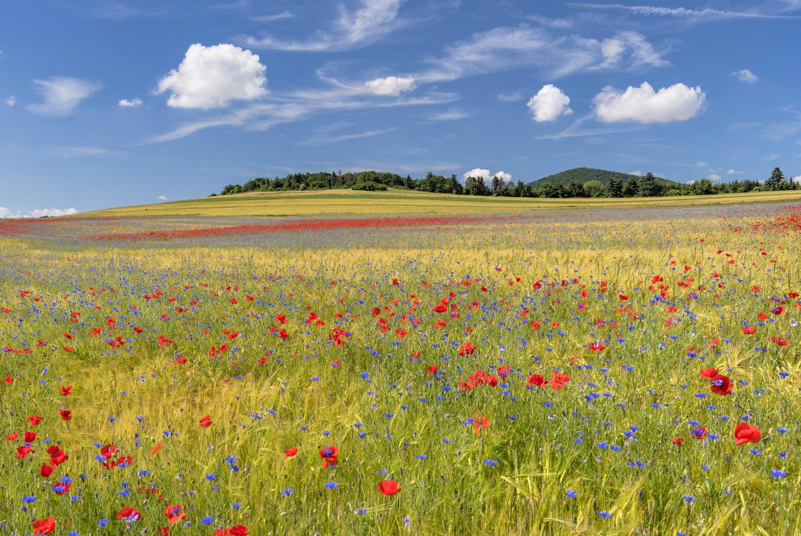 *Sommer in der Osteifel*