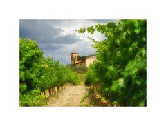 ... Sommer in der Toskana (7) ...