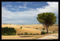 Sommer in der Toskana_09