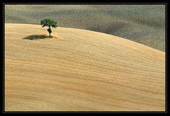 Sommer in der Toskana_14