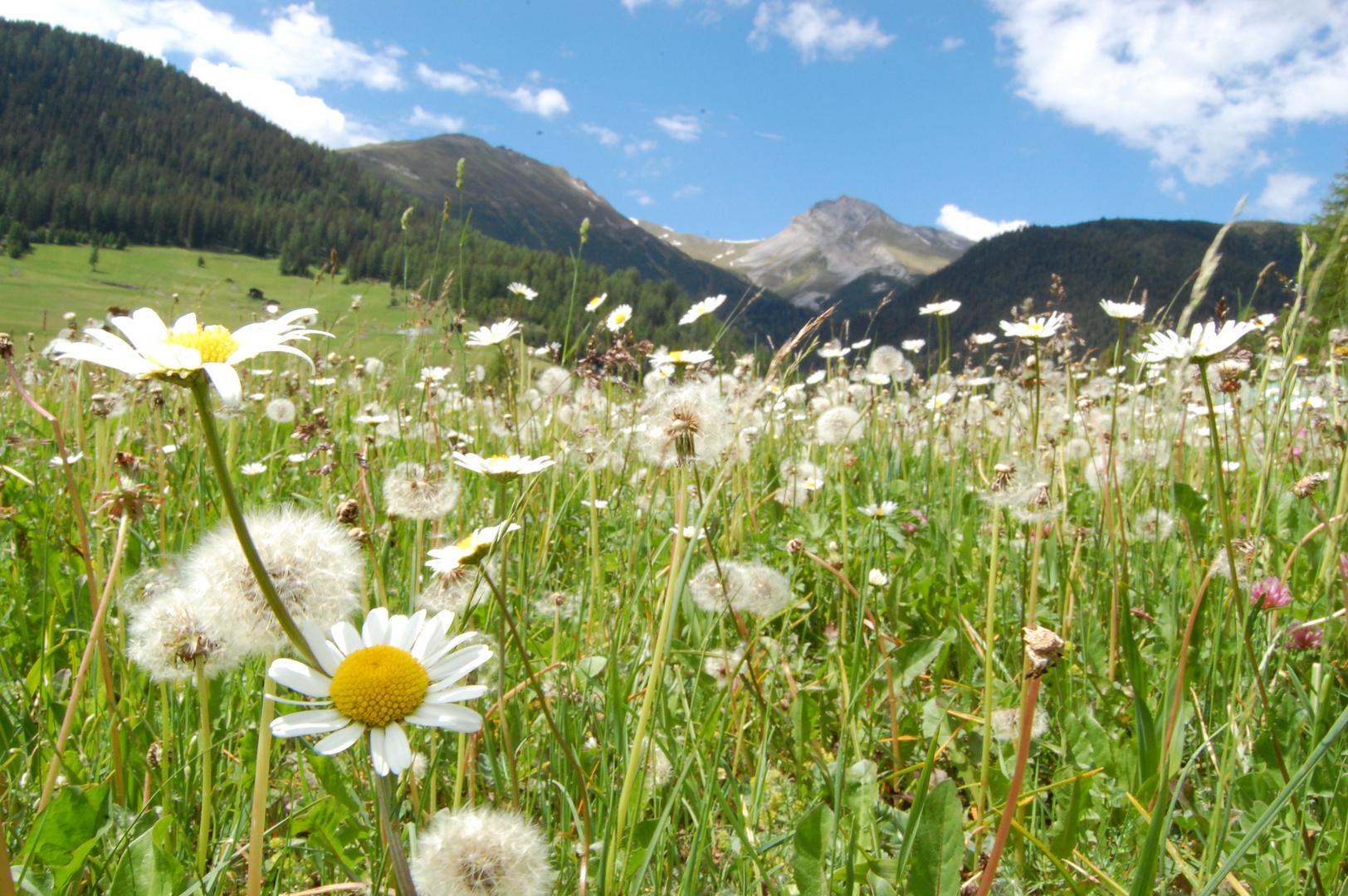 Sommer in Graubünden