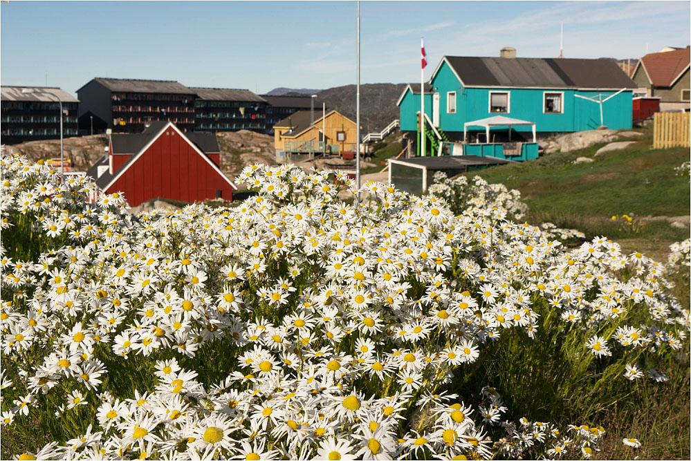 Sommer in Grönland..