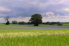 Sommer in Mecklenburg