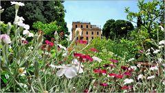 ... Sommer in Rom ...