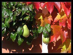 Sommer... oder Herbst.... :-)