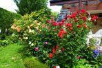 Sommer: Rosen aus meinem Garten