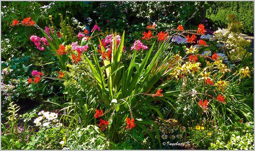 Sommer - Sonne - Blumen