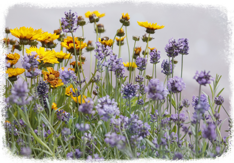 sommer sonne natur foto bild pflanzen pilze flechten bl ten kleinpflanzen. Black Bedroom Furniture Sets. Home Design Ideas