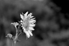 Sommer Sonne Satt # DSC2401