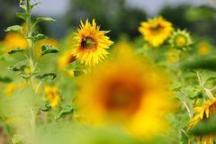 Sommer Sonne Satt # KDL1792