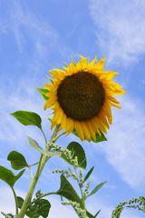 Sommer Sonne Satt KDL1931