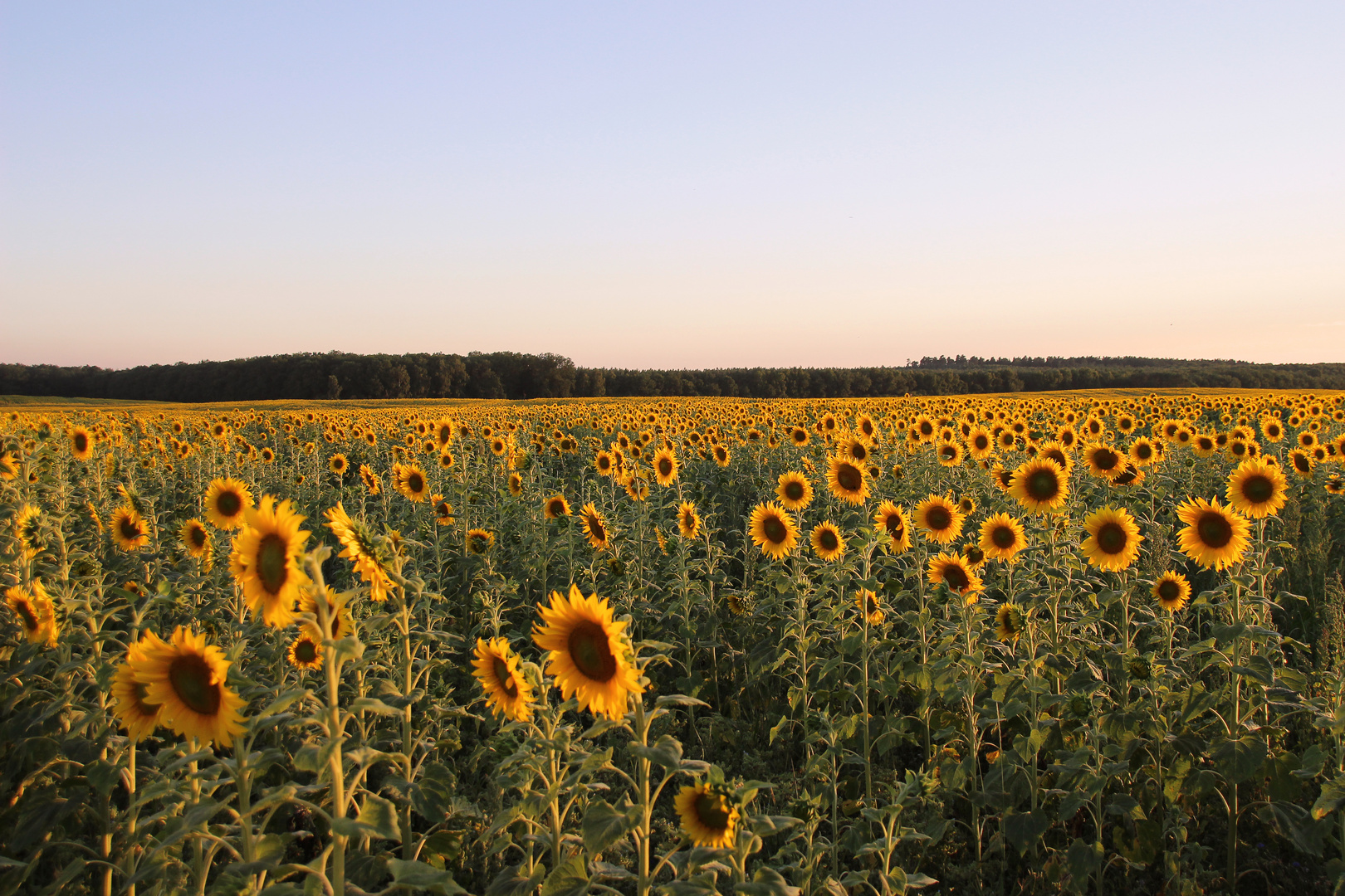 Sommer, Sonne, Sonnenblumen...