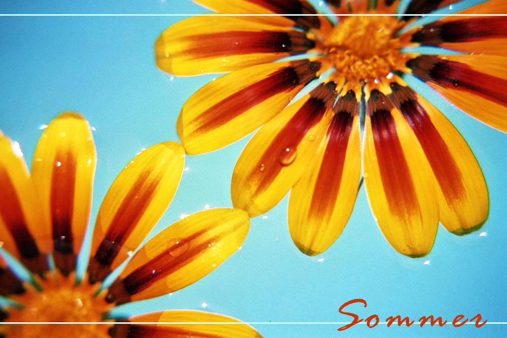 Sommer, Sonne, Sonnenschein ...