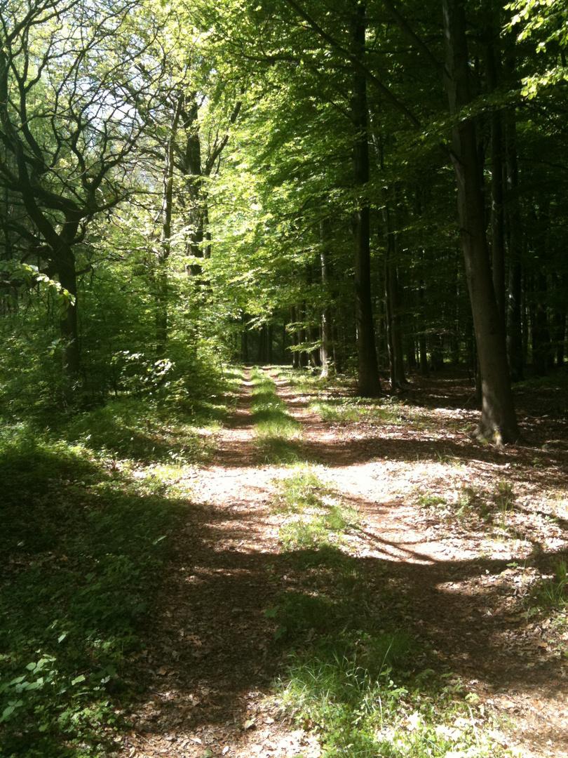 Sommer Tour mit dem Mtb durch die Wälder nähe Ahlhorn