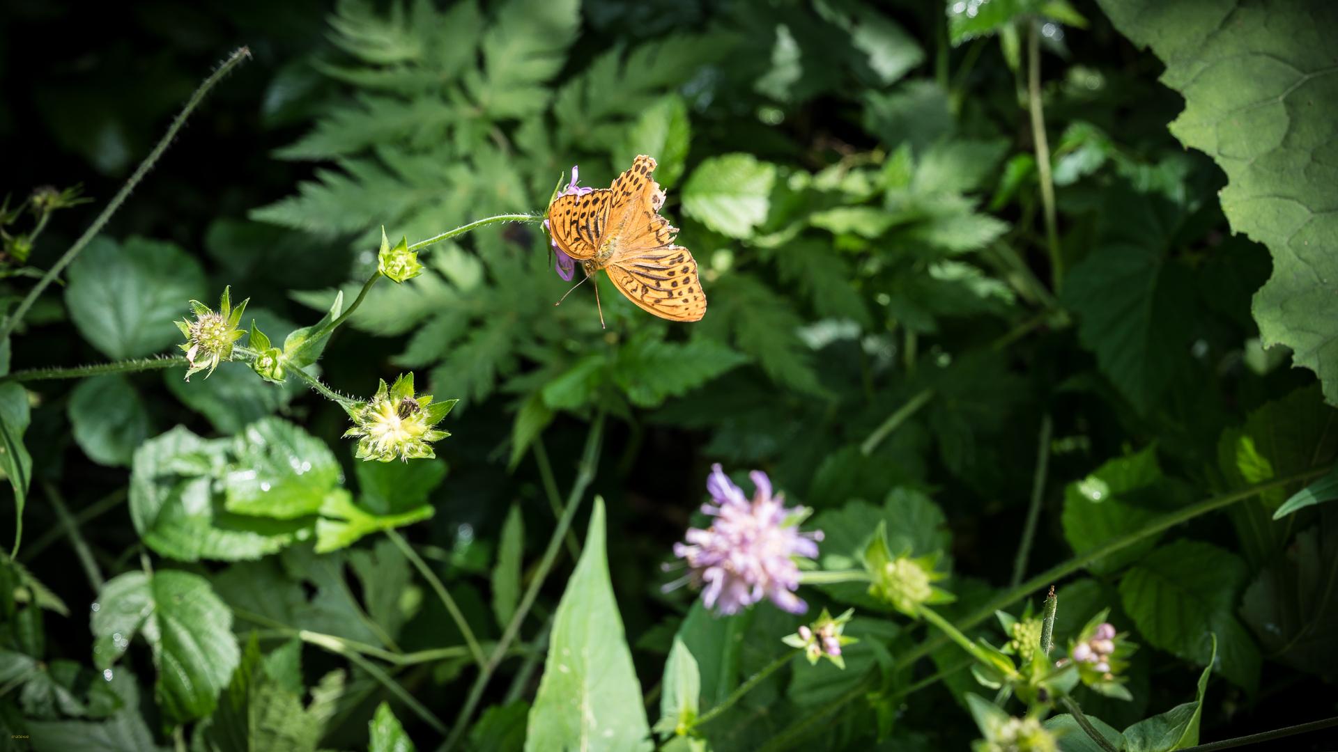 Sommer - Zeit der Schmetterlinge