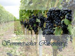 Sommeracher Rosenberg...