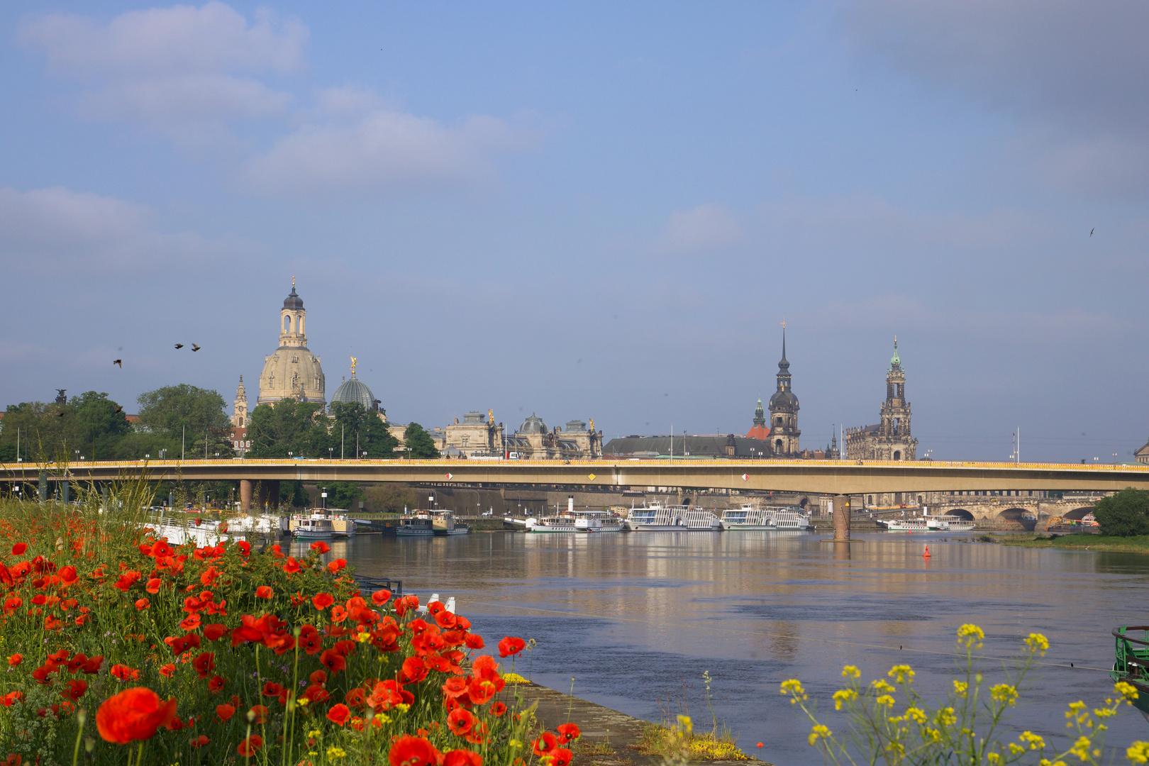 Sommerblick auf Dresden