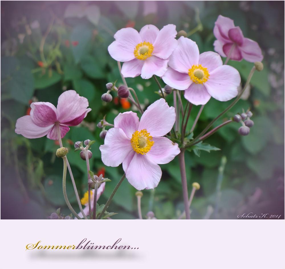 Sommerblümchen...