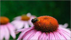 ... Sommerblümchen ...