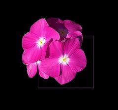 Sommerblümchen # Florecillas de verano