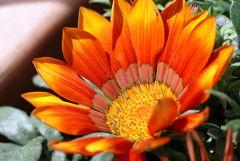 Sommerblüte...