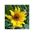 Sommerblüte III
