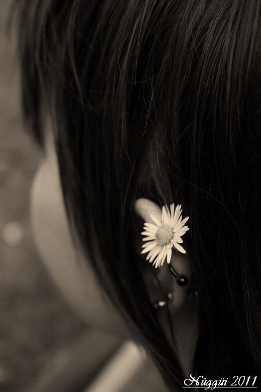 Sommerblume