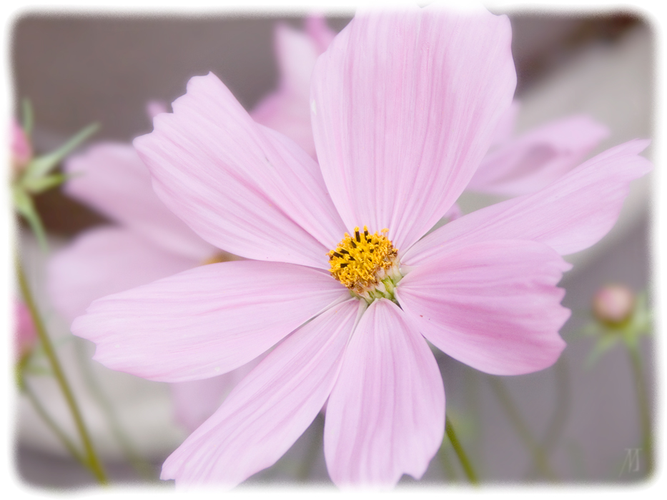 Sommerblume 2