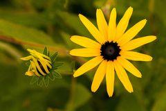 Sommerblume 4