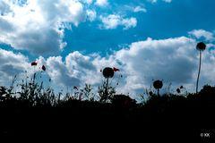 Sommerblumen 01
