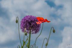 Sommerblumen 02