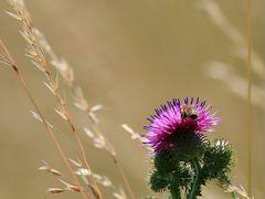 Sommerblumen - 1