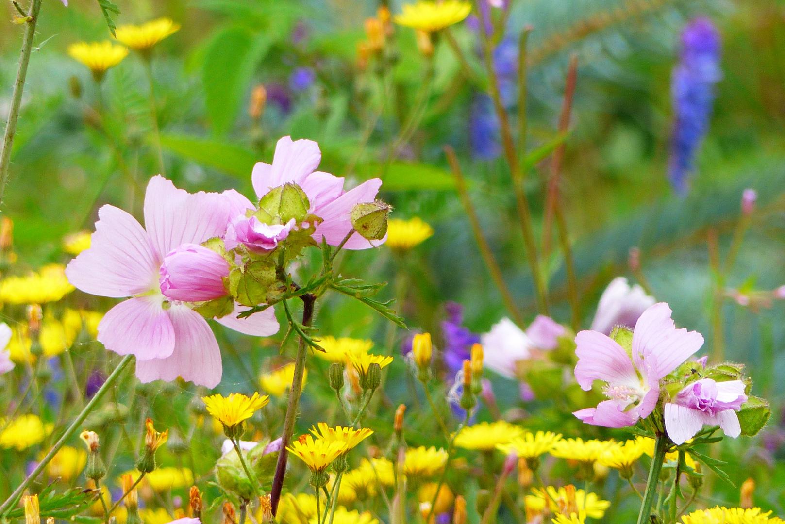 sommerblumen 2*** foto & bild | stillleben, pflanzen, pilze