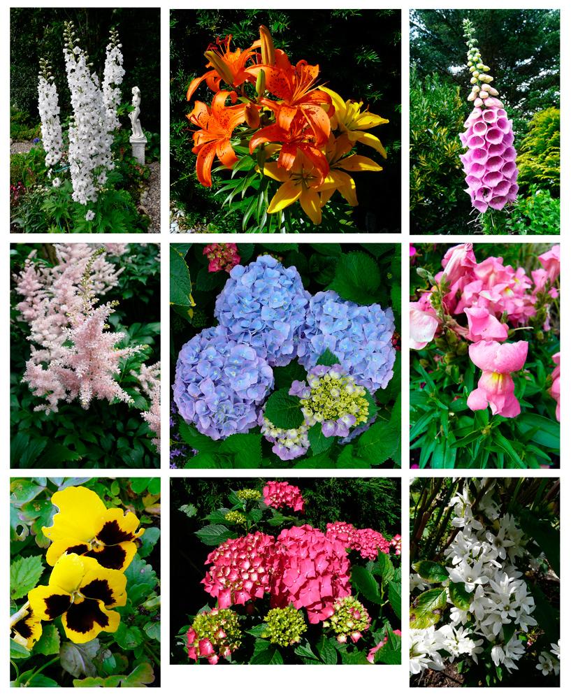 Sommerblumen 2 - ein Lichtblick trotz Aprilwetter im Juni