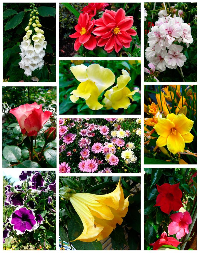 Sommerblumen 3 - ein Lichtblick trotz Aprilwetter im Juni