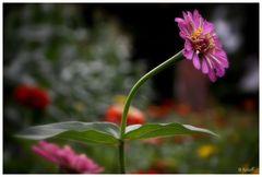 Sommerblumen