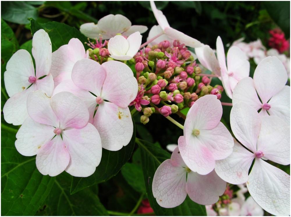 Sommerblumen.....