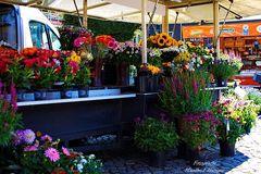 Sommerblumen auf dem Wochenmarkt
