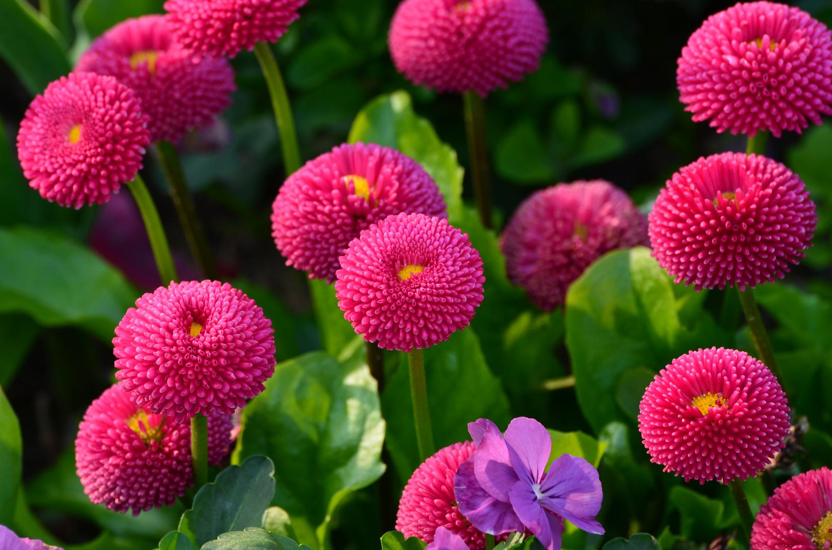 sommerblumen foto & bild | pflanzen, pilze & flechten, blüten