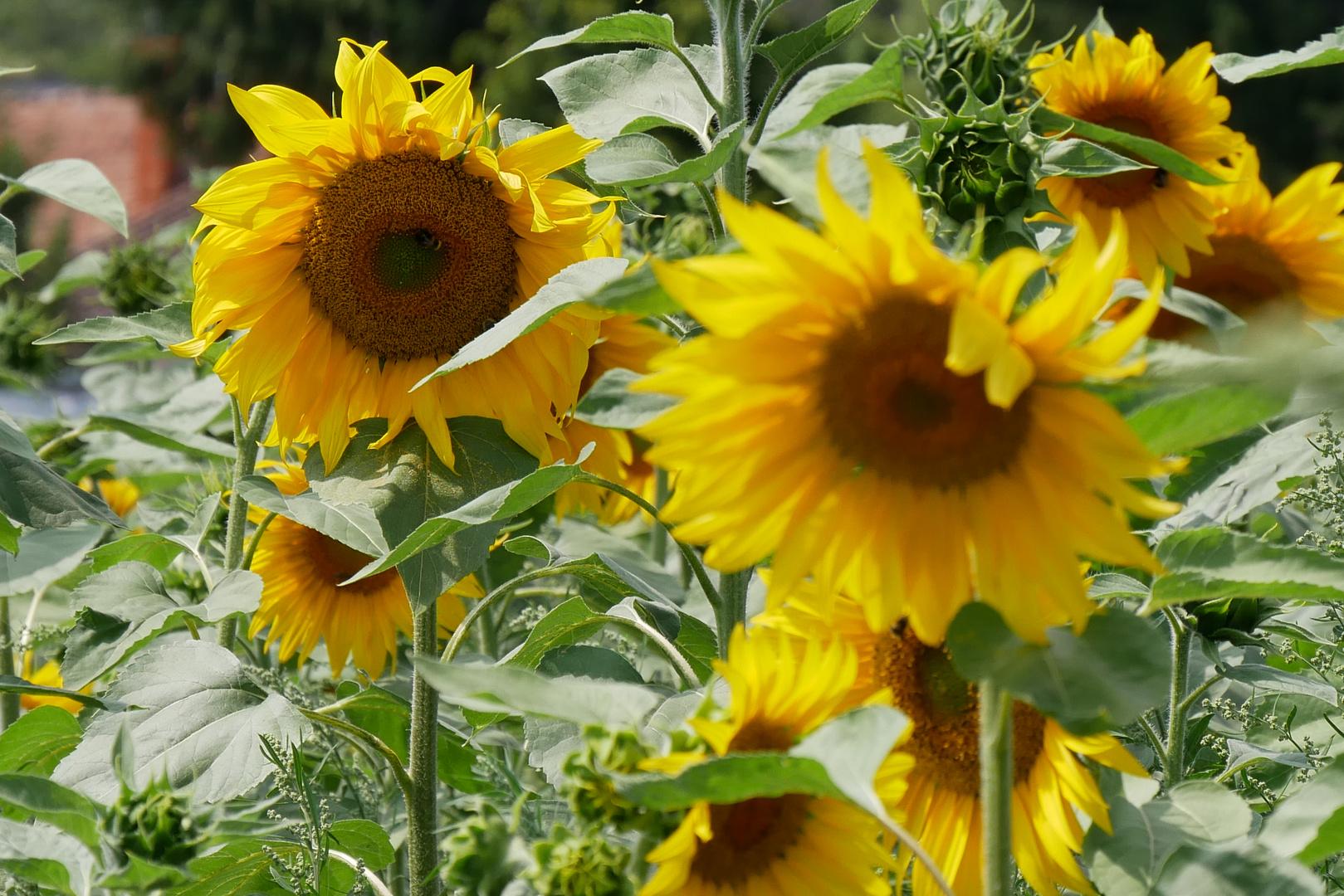 Sommerblumen II