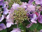 Sommerblumen Makro